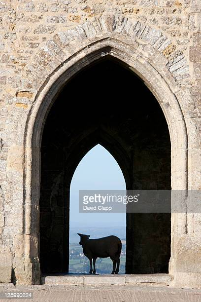 sheep standing under the entrance of st. michael's tower on top of glastonbury tor, somerset, england, uk - 2010 stock pictures, royalty-free photos & images