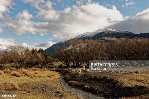 sheep station, otago, new zealand - otago photos et images de collection