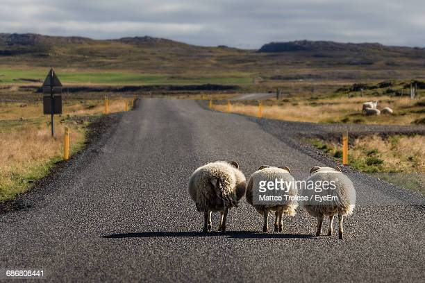 Sheep Walking On Road By Mountains Against Cloudy Sky