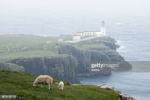 Sheep with lamb grazing on clifftop and Neist Point Lighthouse in the mist on the Isle of Skye Inner Hebrides Scottish Highlands Scotland UK