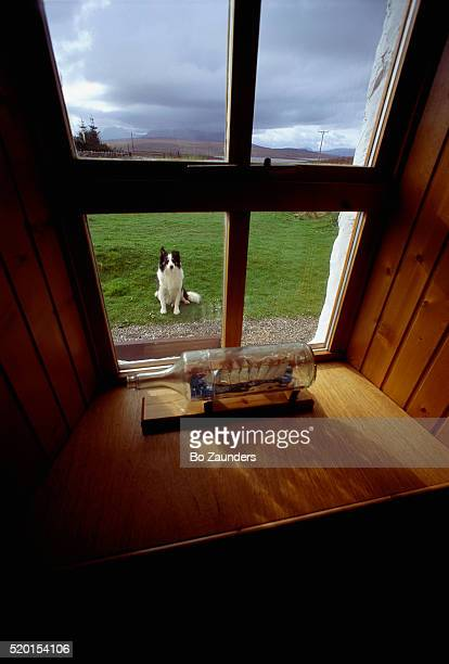 sheepdog looking at window of a cottage - ship in a bottle stock pictures, royalty-free photos & images