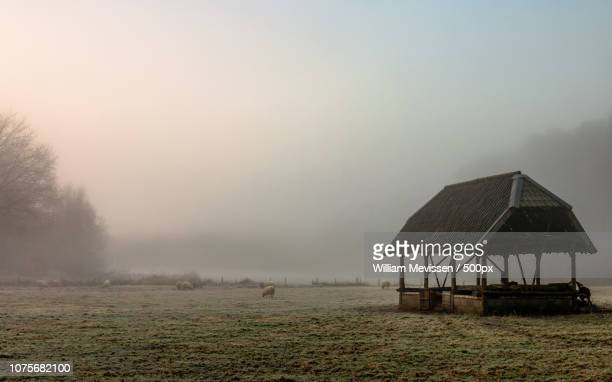 Sheepfold In The Mist