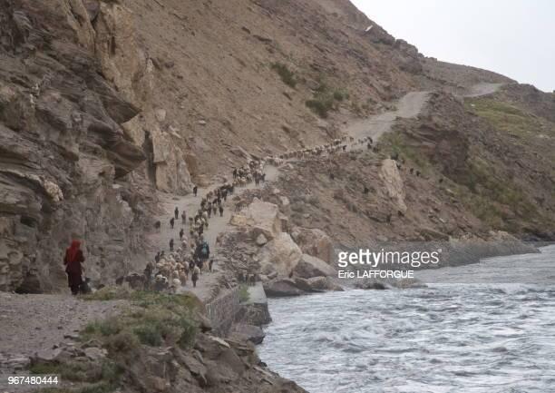 Sheeps and goats on a narrow mountain road, Badakhshan province, Qazi deh, Afghanistan.