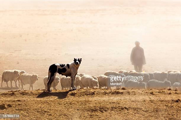 Sheeps, Dog and Shepherd
