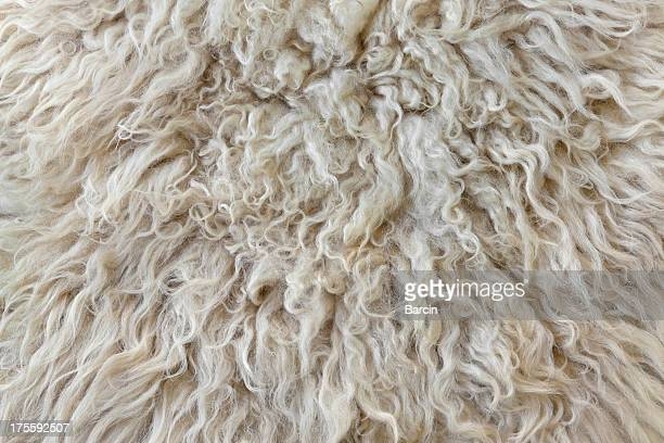 sheepskin - hairy stock pictures, royalty-free photos & images