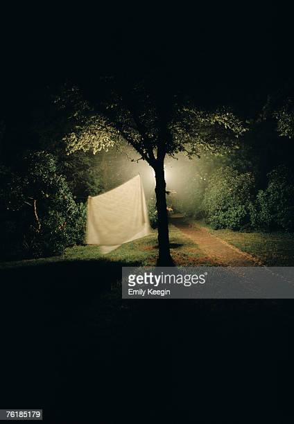 A sheet hanging from a tree at night