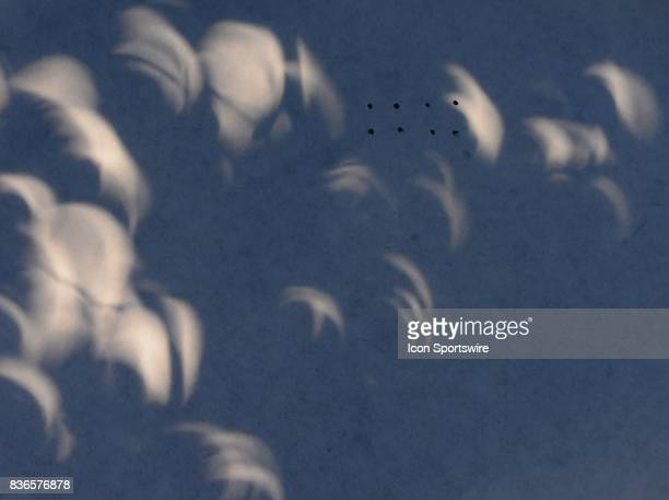 A sheet of paper placed on the ground under a tree shows the patterns the light filtering through the leaves makes during a total eclipse of the sun...