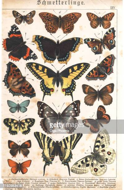 a sheet of very rare watercolor victorian lithography depicting butterflies - gliedmaßen körperteile stock-fotos und bilder
