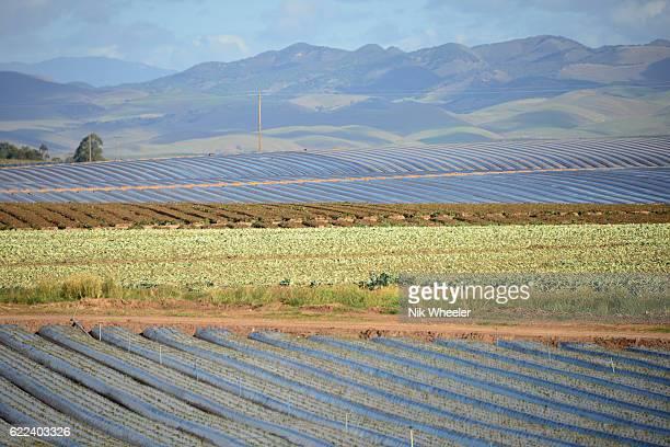 sheet plastic on berry fields in Santa Maria in Santa Barbara County, Central California, USA