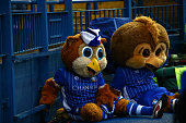 sheffield england sheffield wednesday mascots watch