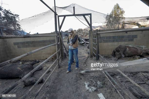 Shelby Hope a horse trainer looks at dead horses carcasses at Padilla Ranch on Little Tujunga Road where 29 horses perished in Creek Fire yesterday...