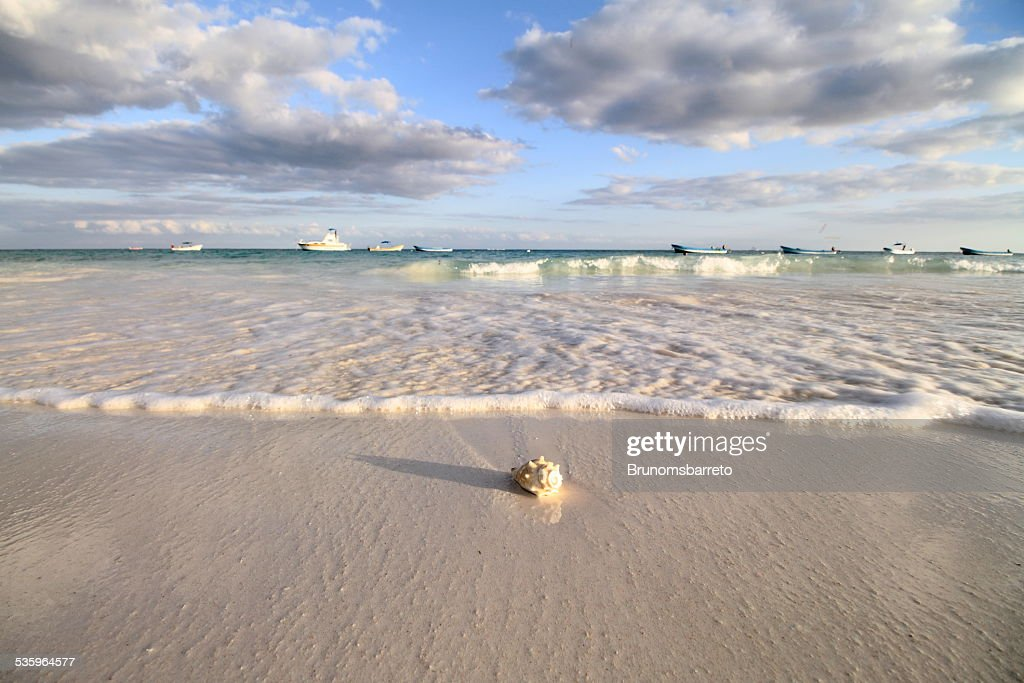 Shell and the sea : Stock Photo