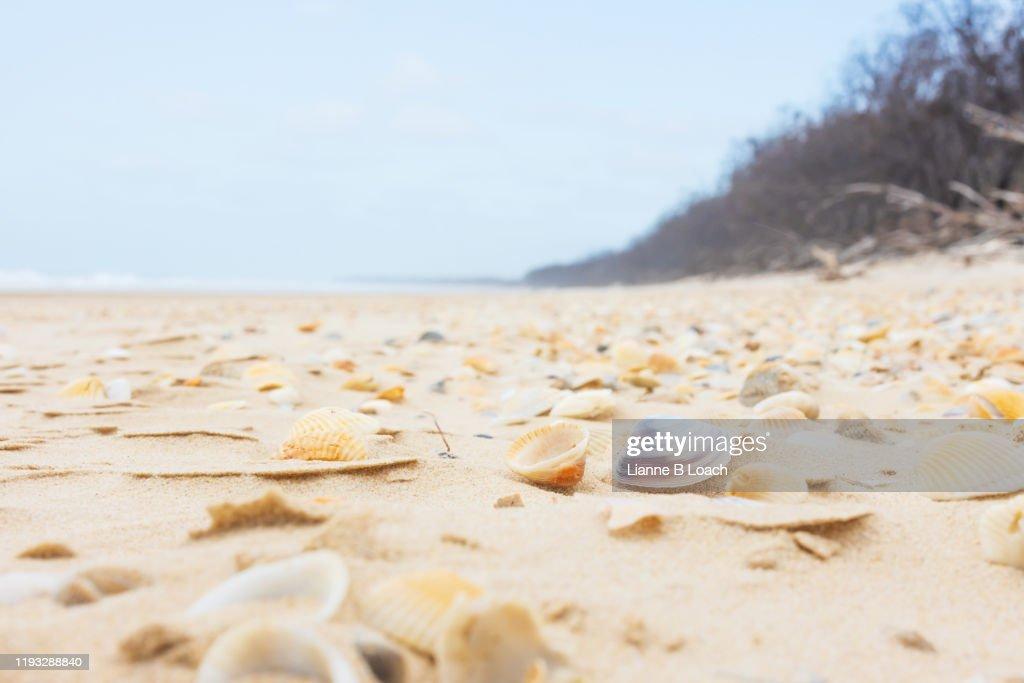 Shell Beach : Stock Photo