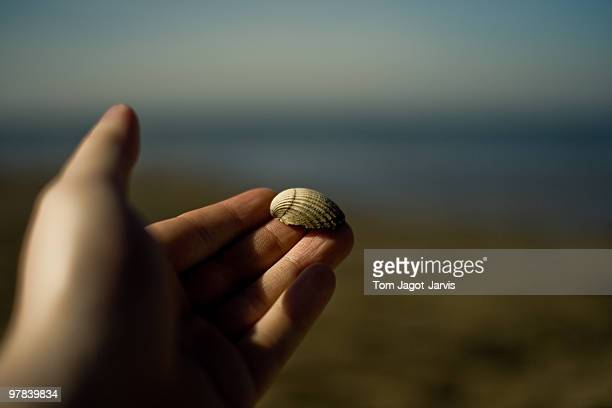 Shell held in a hand