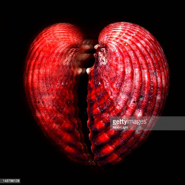 Shell of red heart shape