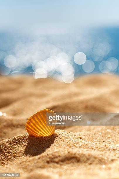シェルのビーチ