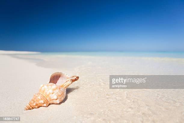 shell on a beautiful beach
