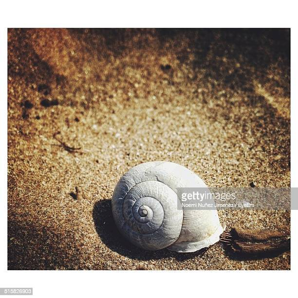 shell on sand - noemi foto e immagini stock