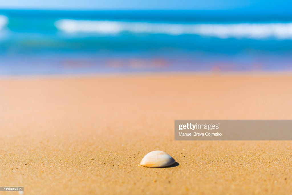A shell on the beach : Stock-Foto