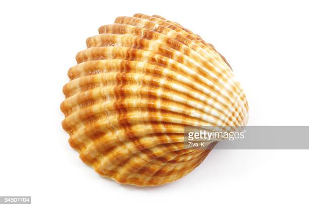 shell - conch shell stock pictures, royalty-free photos & images