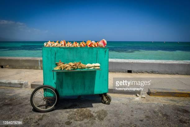 shell shack - jamaica stockfoto's en -beelden