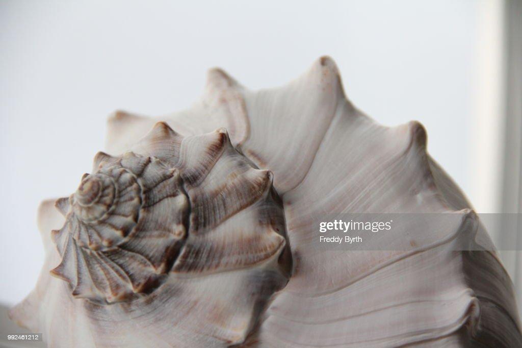 Shell Still Life 2 : Stock Photo