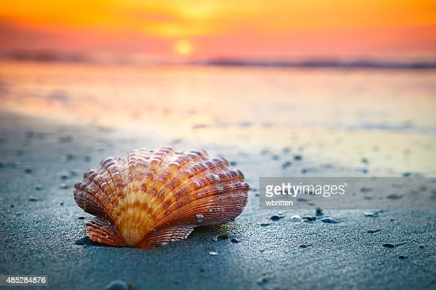 Shell, sunrise and ocean waves