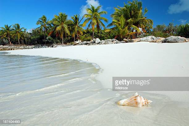 shell washes up on tropical beach - beach stockfoto's en -beelden