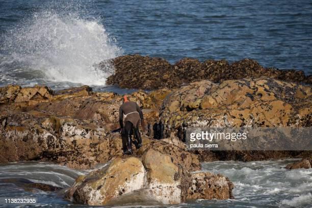 Shellfish catcher working