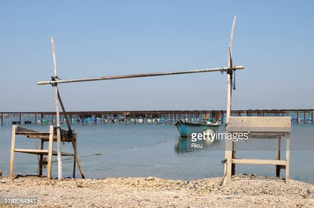 shellfish production - herault stock pictures, royalty-free photos & images