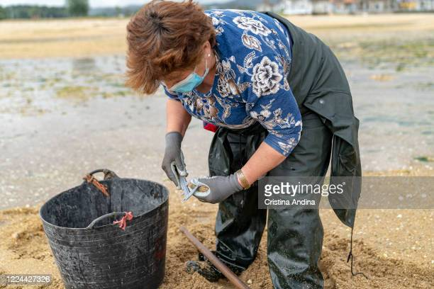Shellfisherwoman Marisa Calo wearing a surgical mask measures a clam to see if it fits on May 12 2020 in A Pobra do Caramiñal Spain The...
