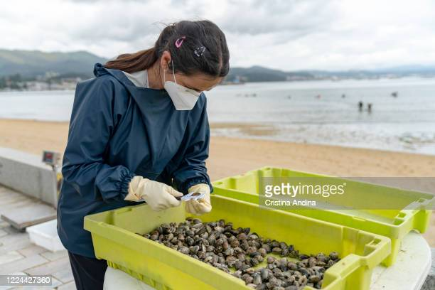 Shellfisherwoman Ventura Insua wearing a surgical mask measures a clam to see if it fits on May 12 2020 in A Pobra do Caramiñal Spain The...
