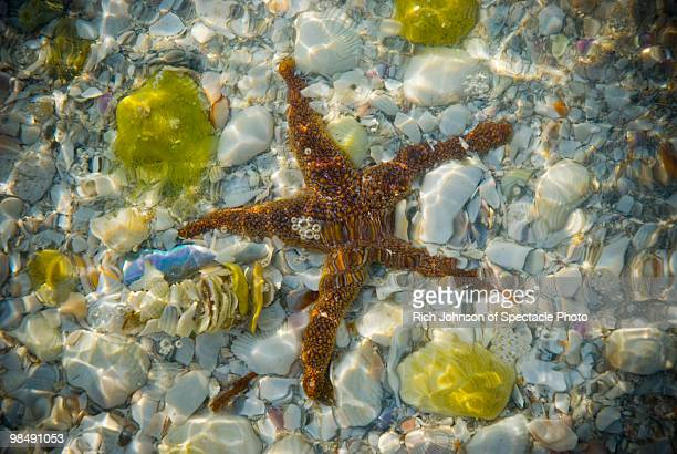 Shells and a Star Fish