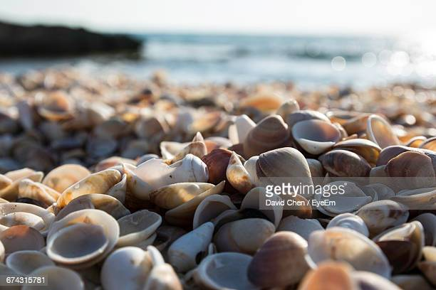Shells At Beach On Sunny Day