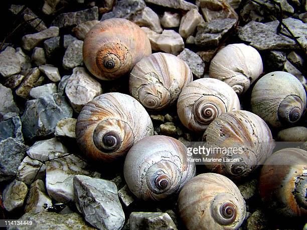 shells on rocks - somerville massachusetts stock pictures, royalty-free photos & images