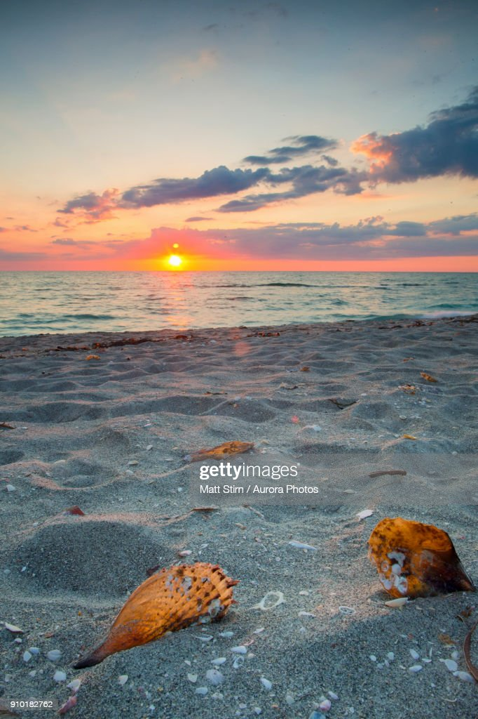 Shells on sandy beach of Captiva Island at scenic sunset, Florida, USA : Stock Photo