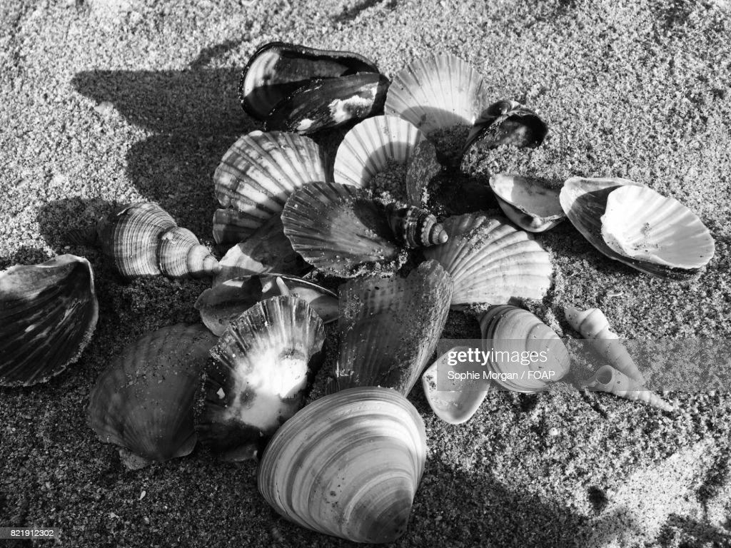 shells on the beach : Stock Photo