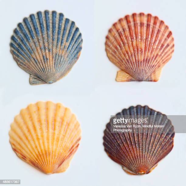 shells - vanessa van ryzin stock photos and pictures