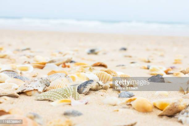 shells, sand & surf - lianne loach stock pictures, royalty-free photos & images