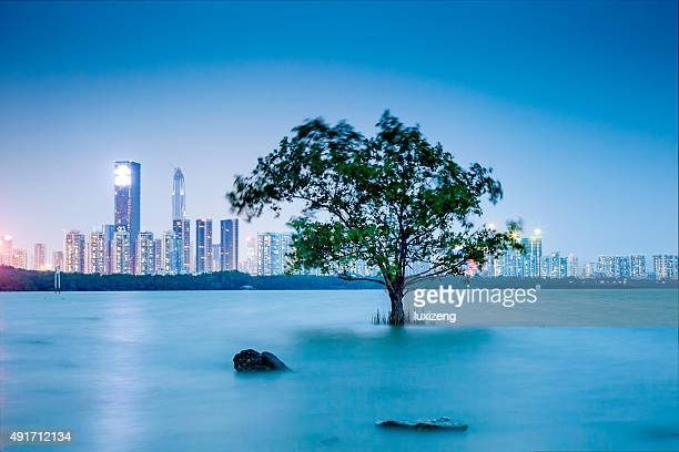 shenzhen bay - guangdong province stock photos and pictures
