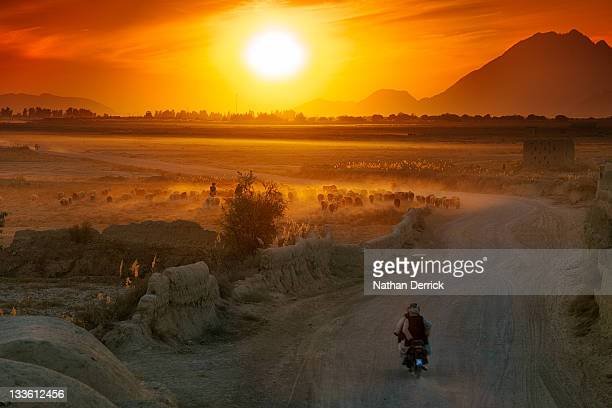 shepard and flock - kandahar afghanistan stock pictures, royalty-free photos & images