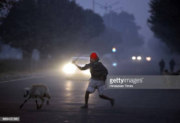 A shepard chases a sheep that strays away from herd along the road amids smog filled morning atmosphere in the outskirts of Dwarka on December 10...