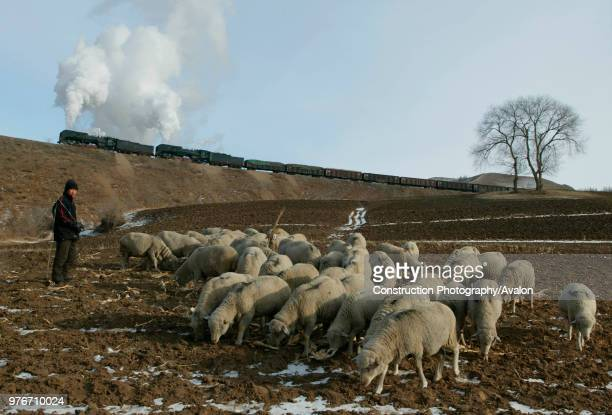 A Shepard tends his flock amid the bleak winter landscape of the Jing Peng Pass Inner Mongolia as a brace of QJ Class 2102s emerge from tunnel No 4...
