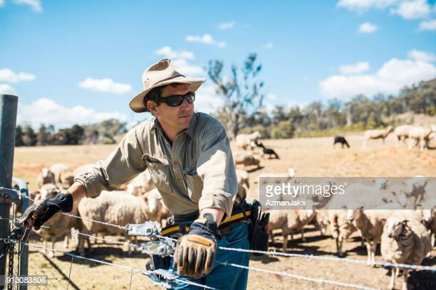 shepard with his herd of sheep - rural scene stock pictures, royalty-free photos & images