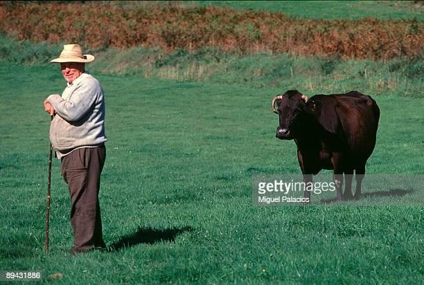 Shepher and cow La Coruna Galicia Miguel Palacios / Cover