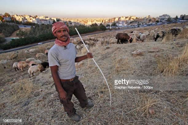 shepherd / amman, jordan (2013) - stephan rebernik stock-fotos und bilder