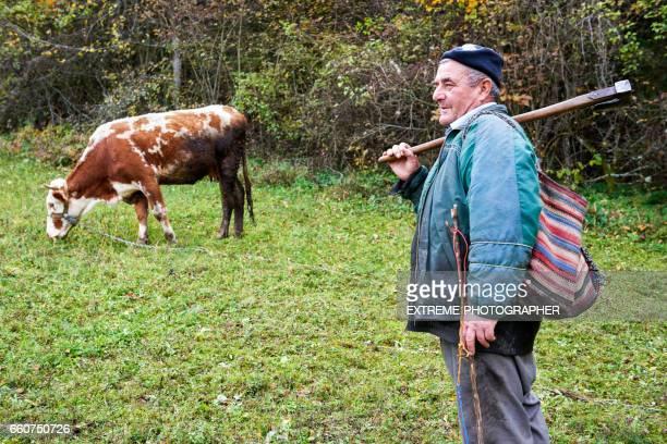 Shepherd and cow