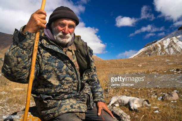 Shepherd and dog bringing their flock of 1050 sheep down from the higher pastures as winter approaches, near Kazbegi, Georgia (Model Release)