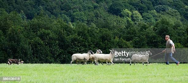 Shepherd and his dog take part in the British National Sheep Dog Trials on August 6, 2016 in York, England. Some 150 of the best sheepdogs and...
