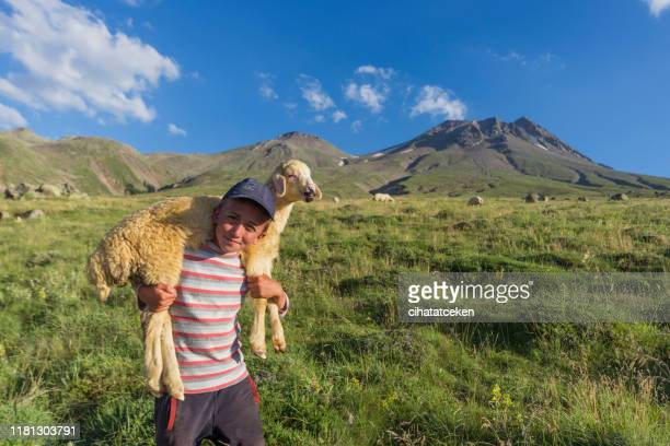shepherd and lamb - shepherd stock pictures, royalty-free photos & images